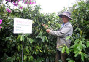 23/05/2019, 17:04 (GMT+7) Ngày 23/5 tại Hà Nội, Bộ NN-PTNT và Diễn đàn Cà phê Toàn cầu (GCP) tổ chức Hội thảo Công bố kết quả thí điểm hệ thống thông tin mã số vùng trồng cà phê đã triển khai trên 8.500 hộ trồng cà phê tại tỉnh Lâm Đồng.